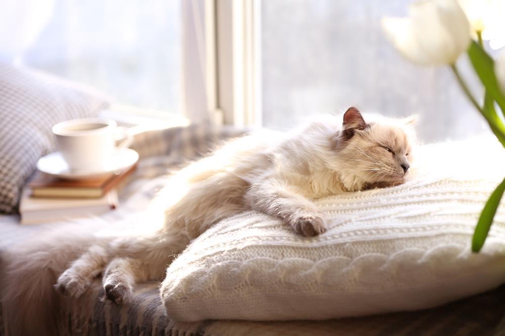 Content Cat | Ivanhoe Vet