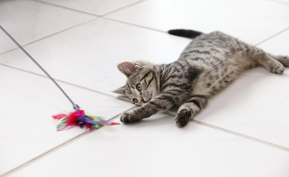 Playful Cat | Ivanhoe Vet