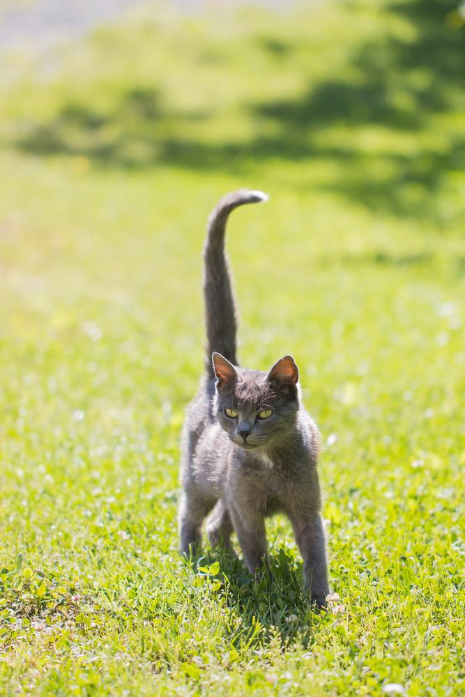 Tail Movements | Ivanhoe Vet