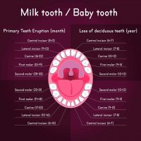 Tooth Loss Chart   Simply Dental Chatswood