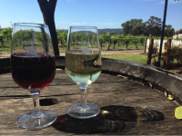Red Wine Guide | Top Gun Tours